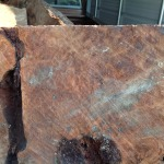 Close up of a redwood burl showing action in the wood